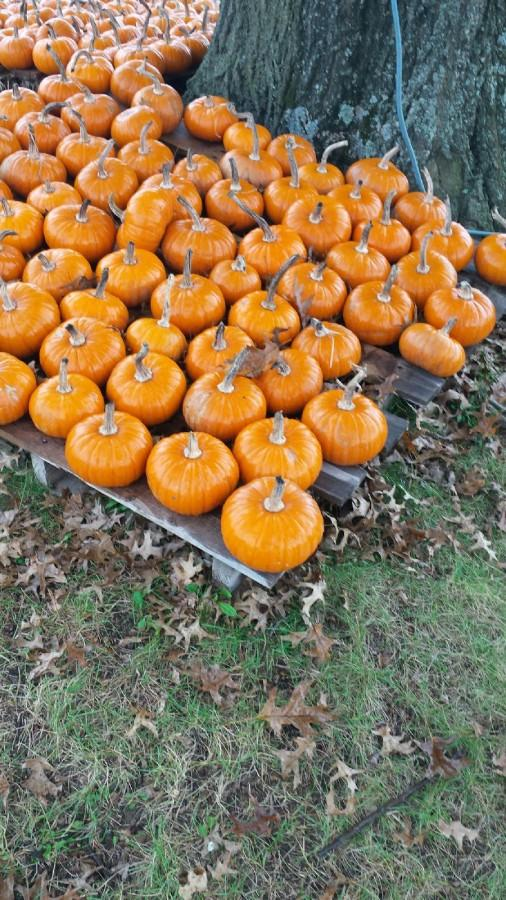 Pick a pumpkin and have your own experience!